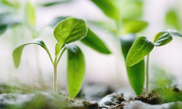 10 vārdi angļu valodā saistīti ar dārzkopību