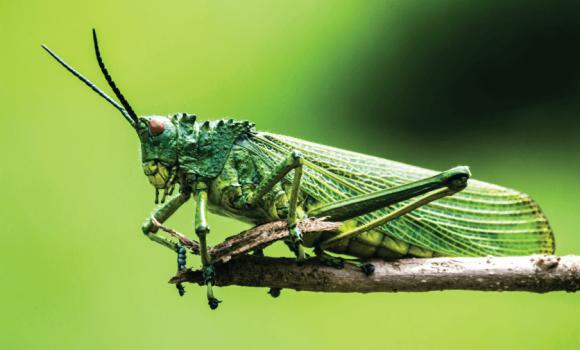10 vārdi angļu valodā saistīti ar kukaiņiem