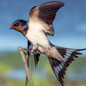 10 vārdi angļu valodā saistīti ar putniem